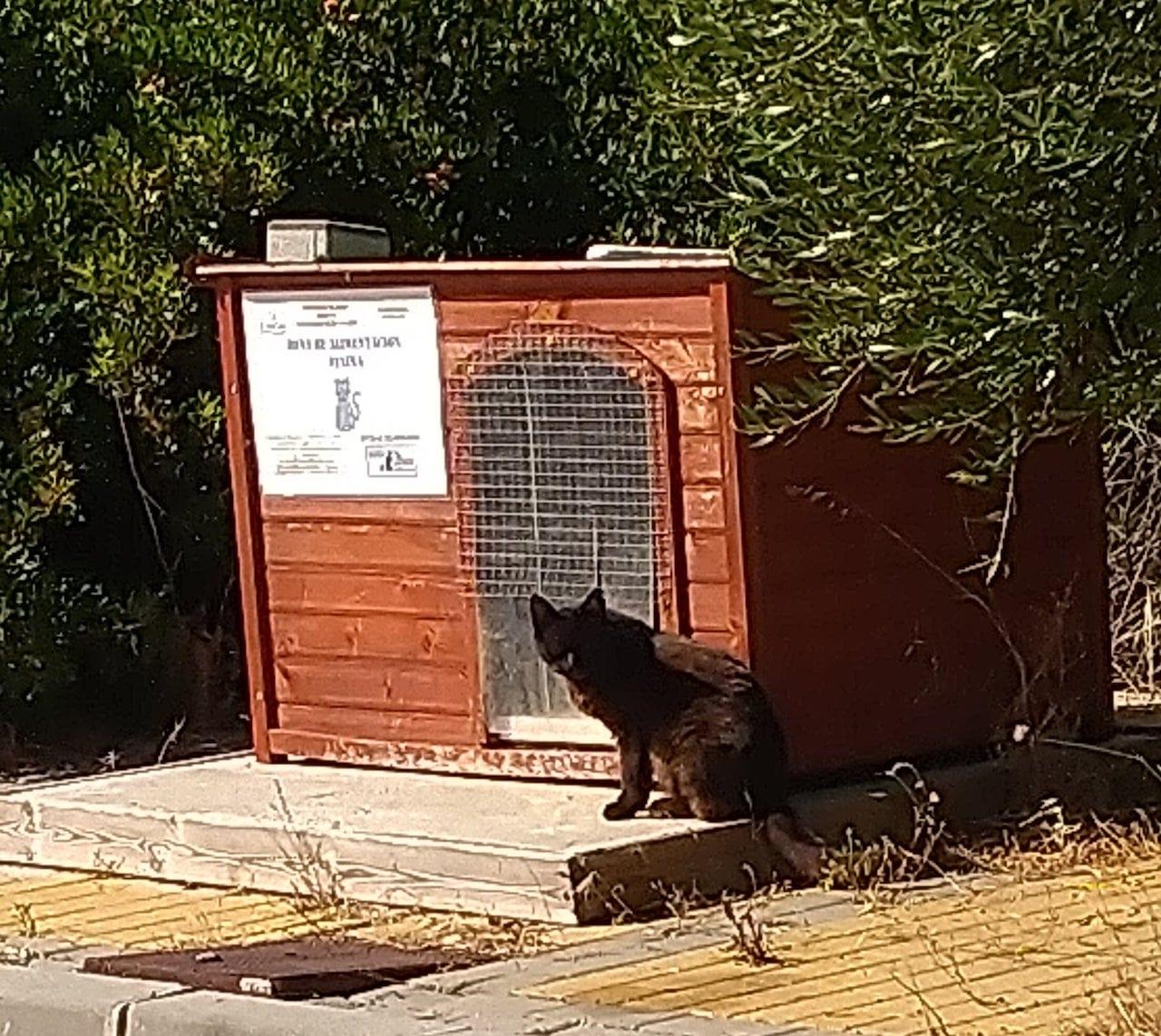 cat-feeding-station2