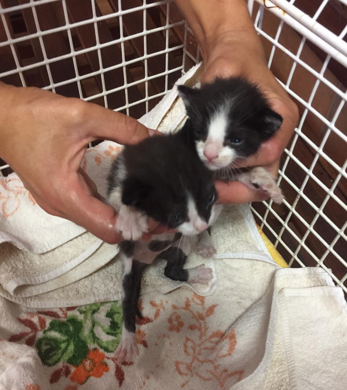 Dos gatitos rescatamos
