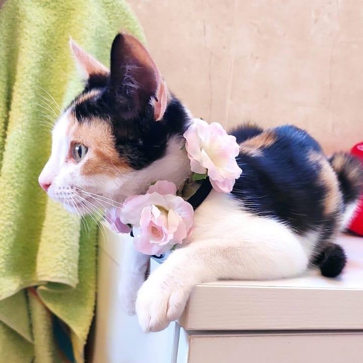 flower-cat1