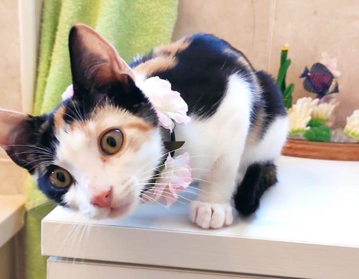 flower-cat2