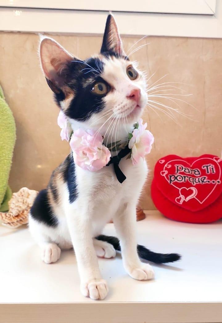 flower-cat3