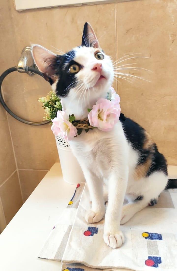 flower-cat6