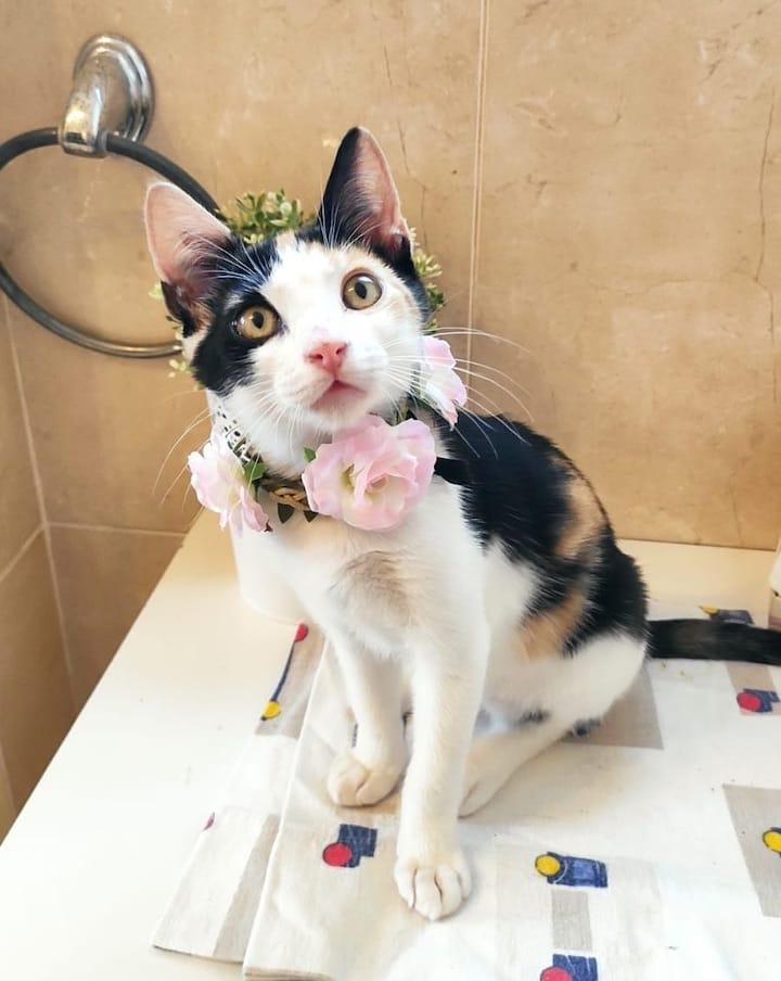 flower-cat7
