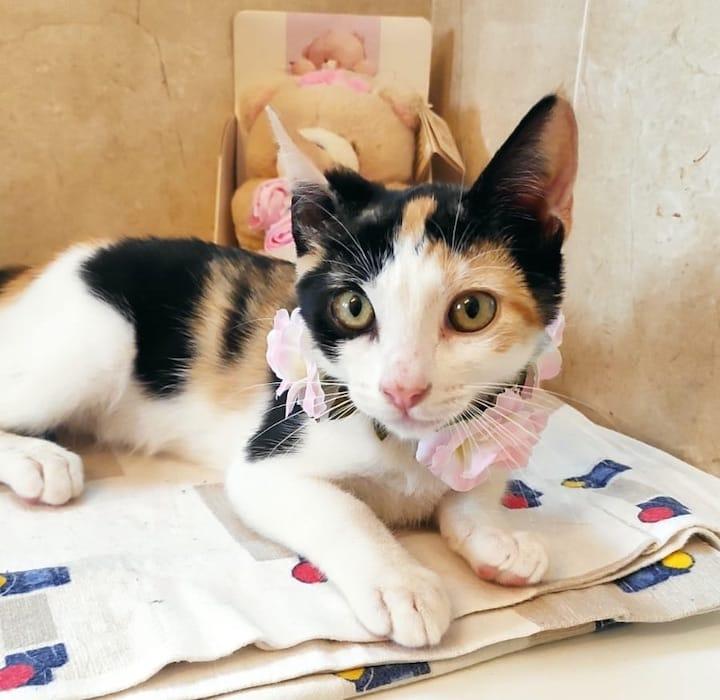 flower-cat8