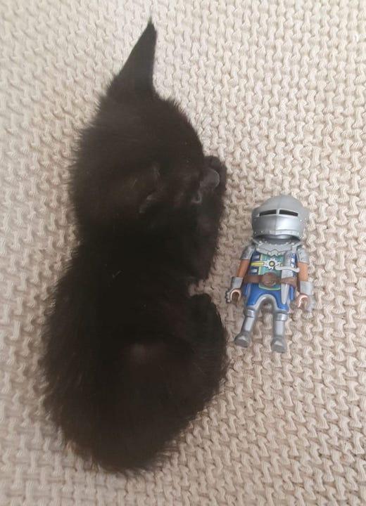 pequeno-con-roboto