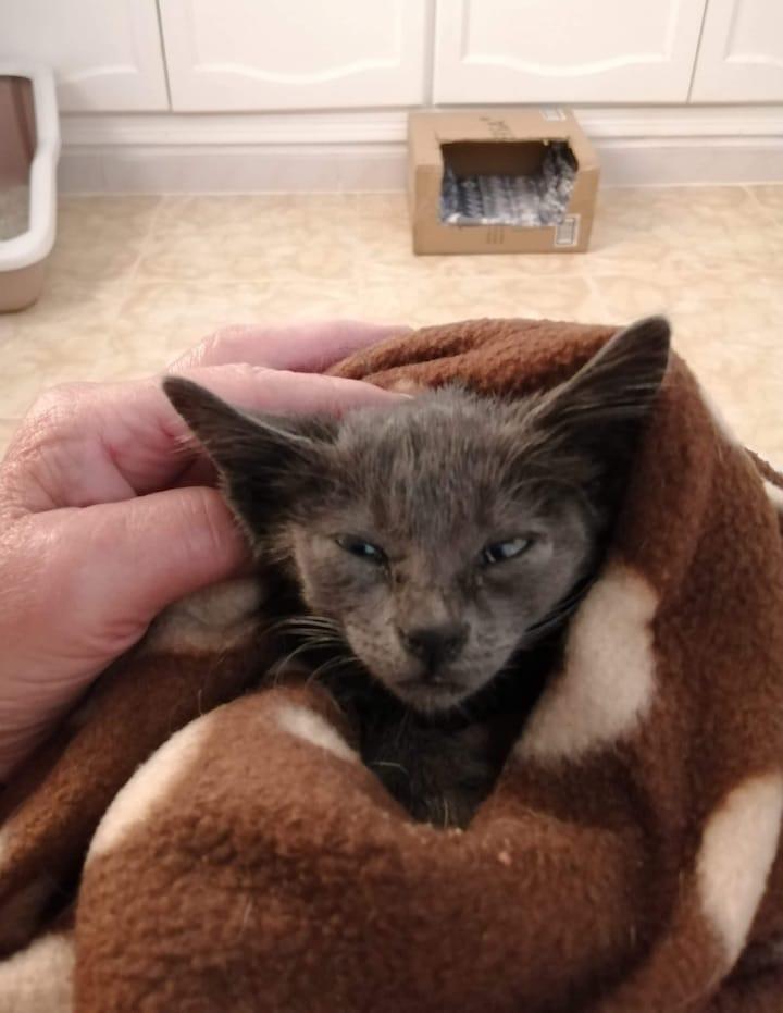 Arthur - rescued in Estepona Puerto