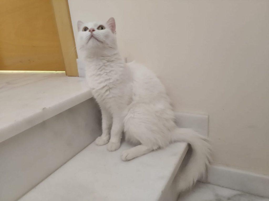 bianca-1