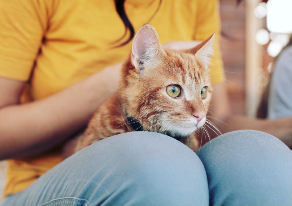 cat-listening