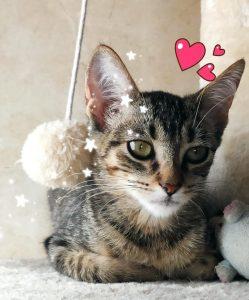 Gretel - cat for adoption