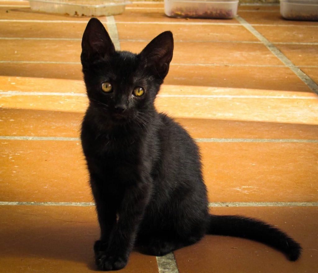 Obsidian for adoption