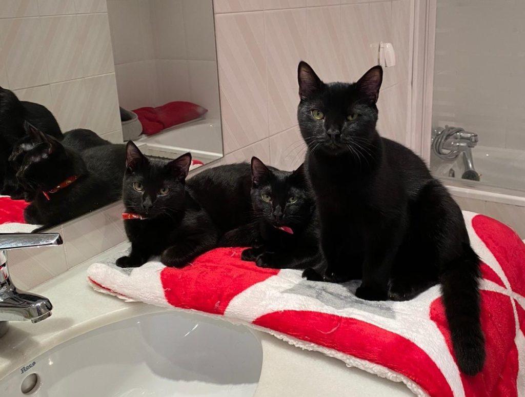 Teddy, Zoe & Blue - cats for adoption