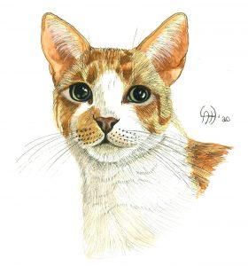 Cat Art -