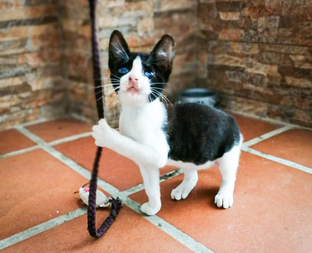 Timy - cat for adoption