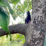 protocolo-ces-gato-negro