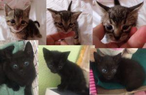 6 gatitos
